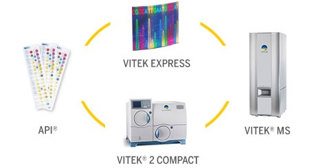 Vitek Express Collage